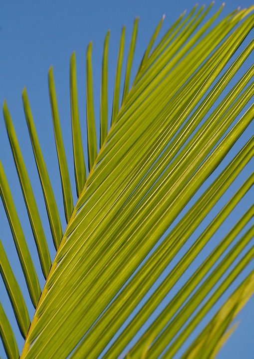 frond-432801_960_720