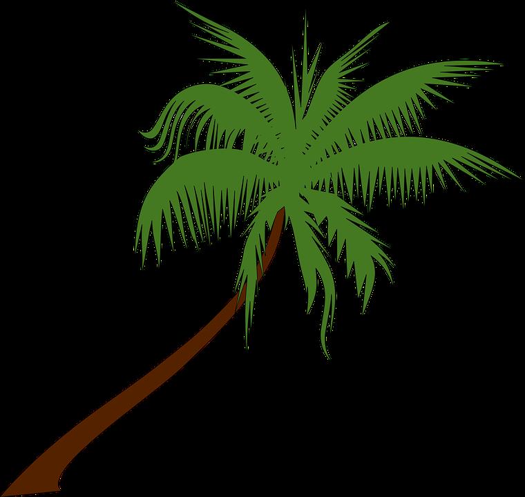 palm-tree-155730_960_720