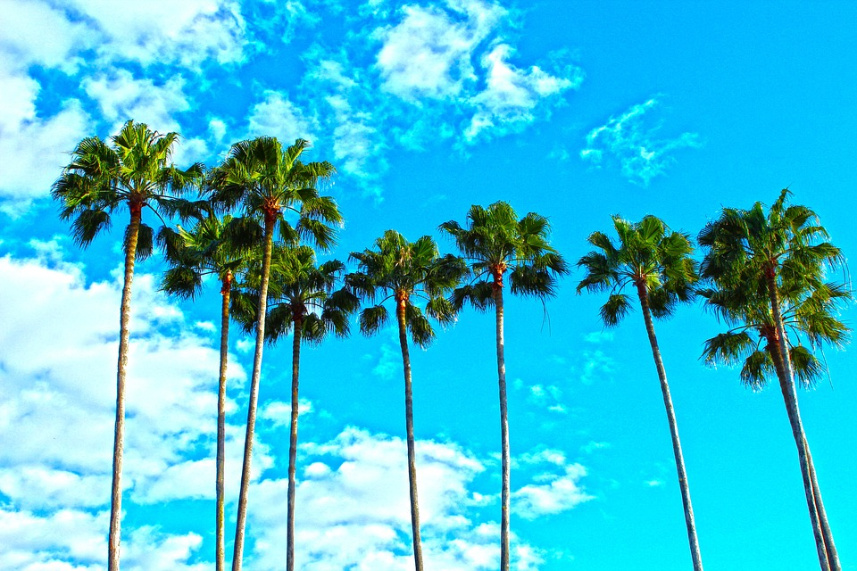 palm-trees-1277243_960_720