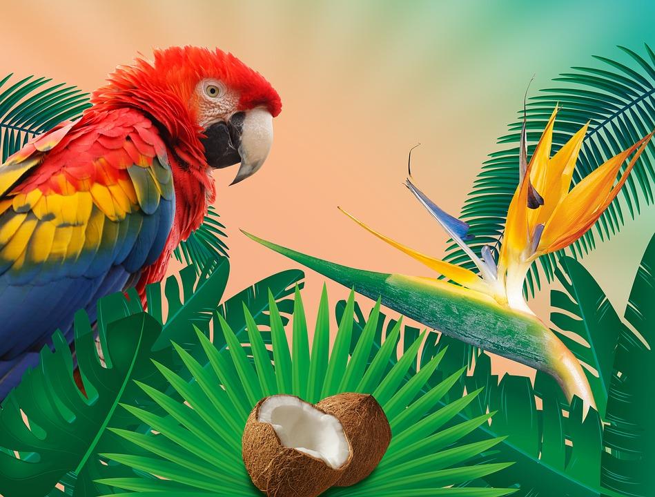 tropics-1561635_960_720